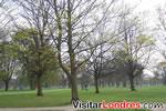 Arboles en el parque Hyde